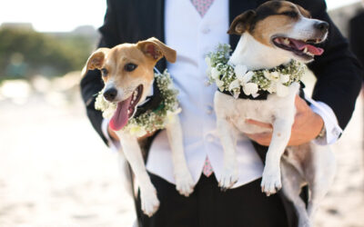 DOG OF HONOUR PAMPER PACKAGE AT PETMANIA